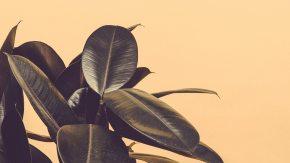 leafs_1